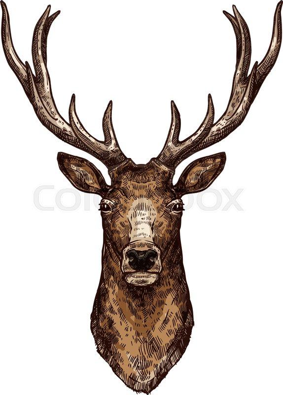 574x800 Deer Isolated Sketch Of Wild Forest Animal. Brown Deer, Elk Or