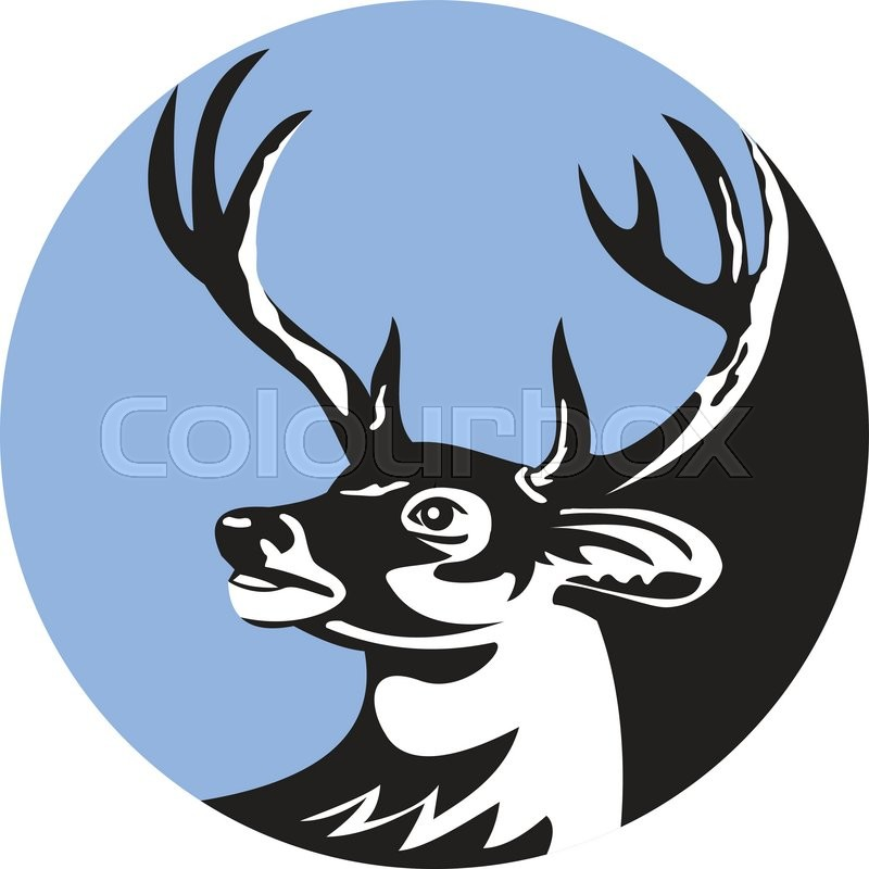800x800 Illustration Of A Whitetail Deer Buck Stag Head Looking To The