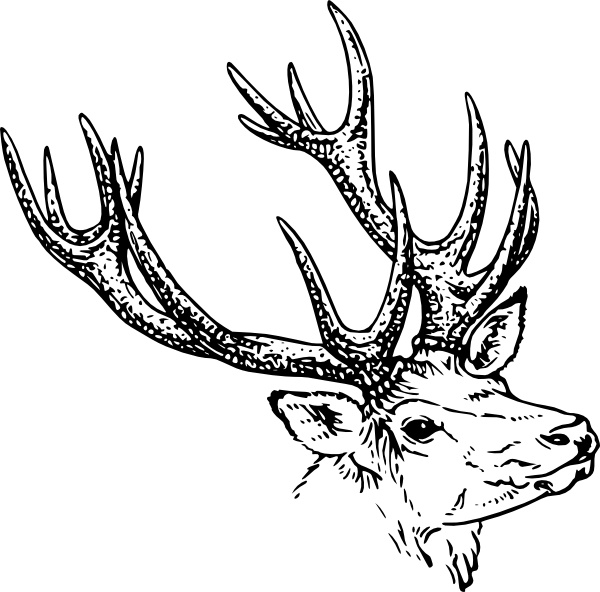 600x592 Stag Head Clip Art Free Vector In Open Office Drawing Svg ( .svg