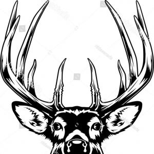 300x300 Whitetail Deer Head Vector Illustration Arenawp