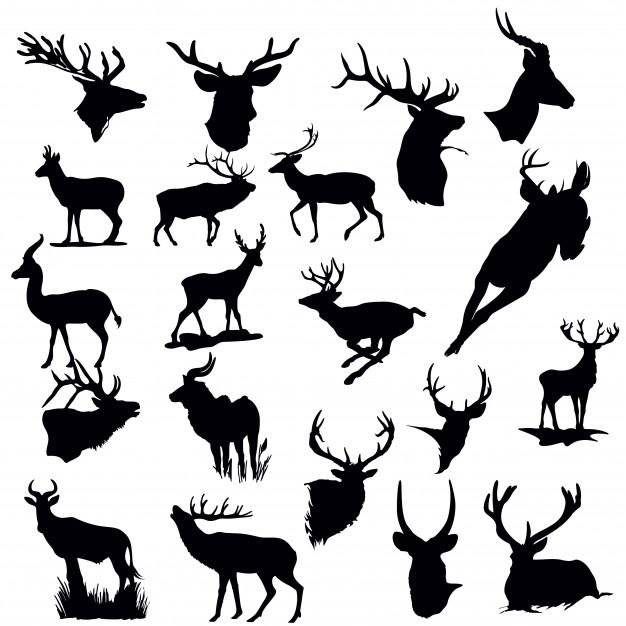626x626 Stag Vectors, Photos And Psd Files Free Download