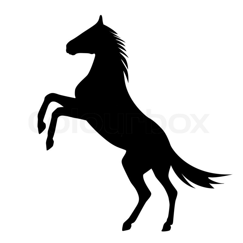 800x800 Rearing Up Horse Vector Silhouette Stock Vector Colourbox