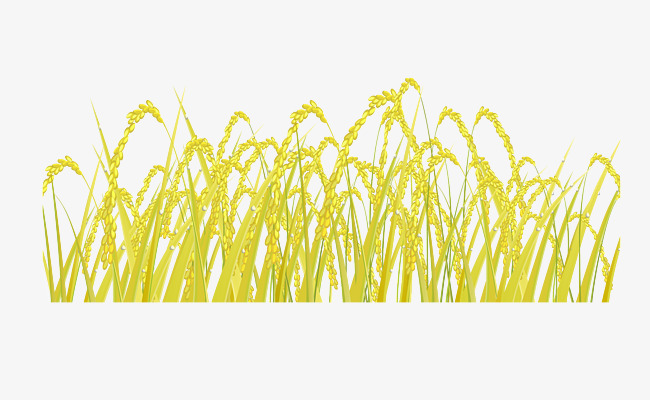 650x400 Vector Rice, Rice, Food, Staple Food Png And Vector For Free Download