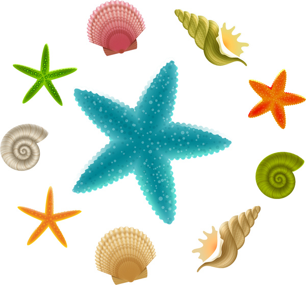 600x560 Seashell And Starfish Collections Free Vector In Adobe Illustrator