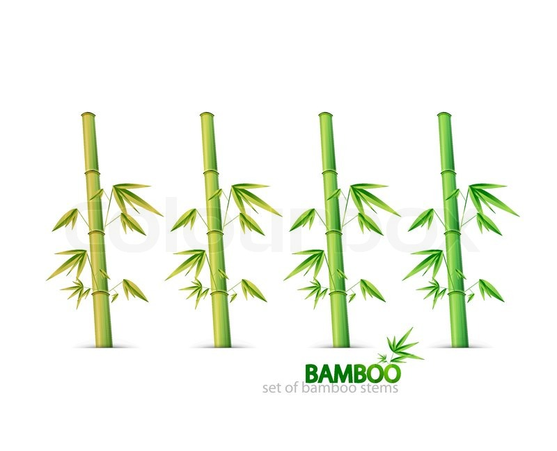 800x648 Bamboo Stem Design For Your Project Stock Vector Colourbox