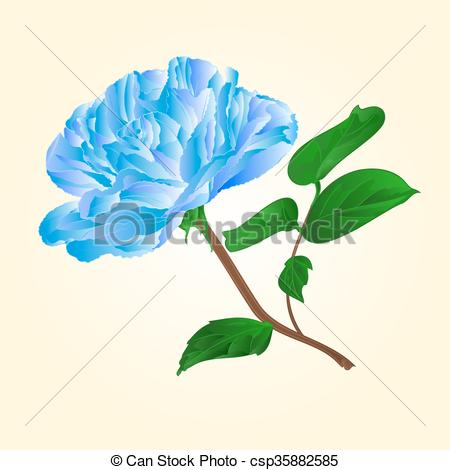 450x470 Blue Rose Stem Vector.eps. Blue Rose Stem With Leaves And Blossoms