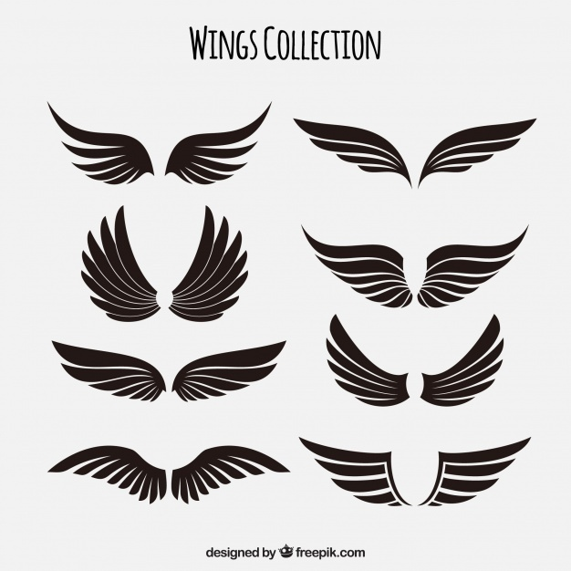 626x626 Wings Vectors, Photos And Psd Files Free Download