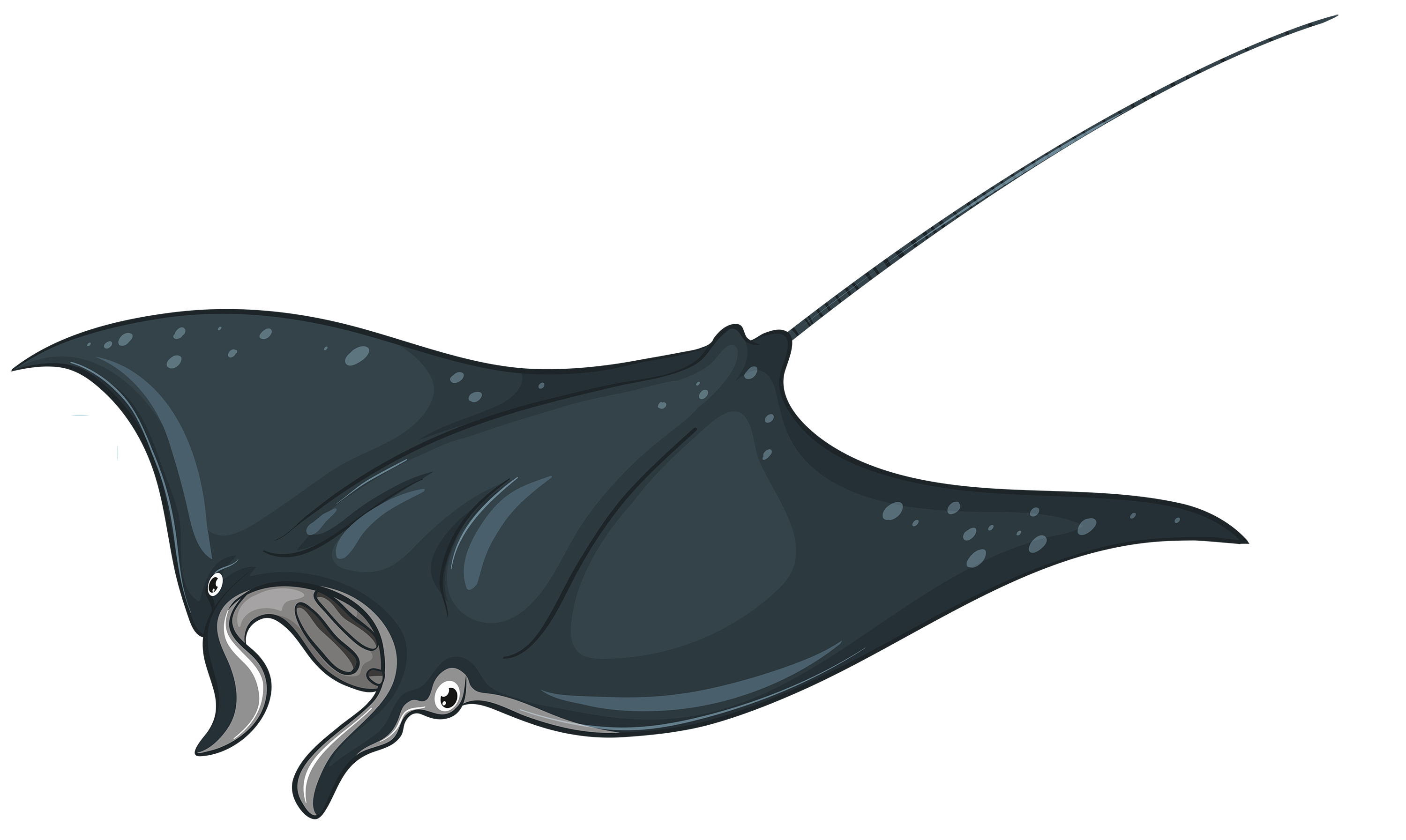 3000x1793 Stingray Clipart Electric