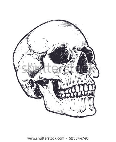 387x470 Collection Of Skull Drawing Vector High Quality, Free