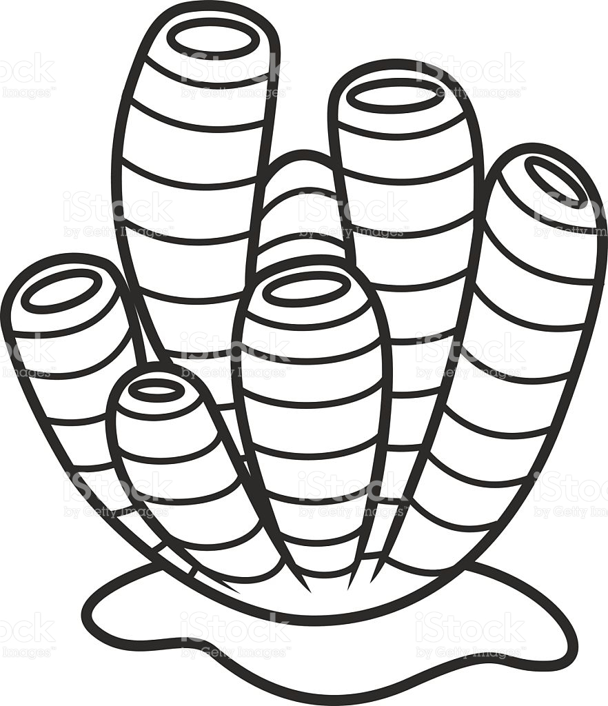 882x1024 Collection Of Free Corol Clipart Marine Sponge. Download On Ubisafe