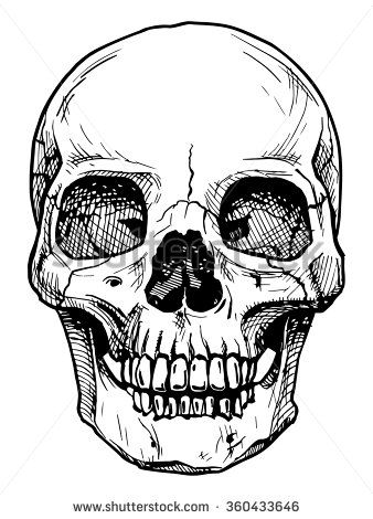 338x470 Vector Black And White Illustration Of Human Skull With A Lower