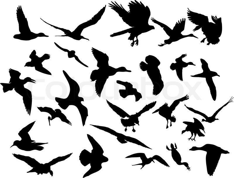 800x609 Vector Illustrations Black Silhouettes Birds On White Stock