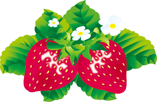 537x349 Juicy Fresh Strawberries Set Vector Png Images, Backgrounds And