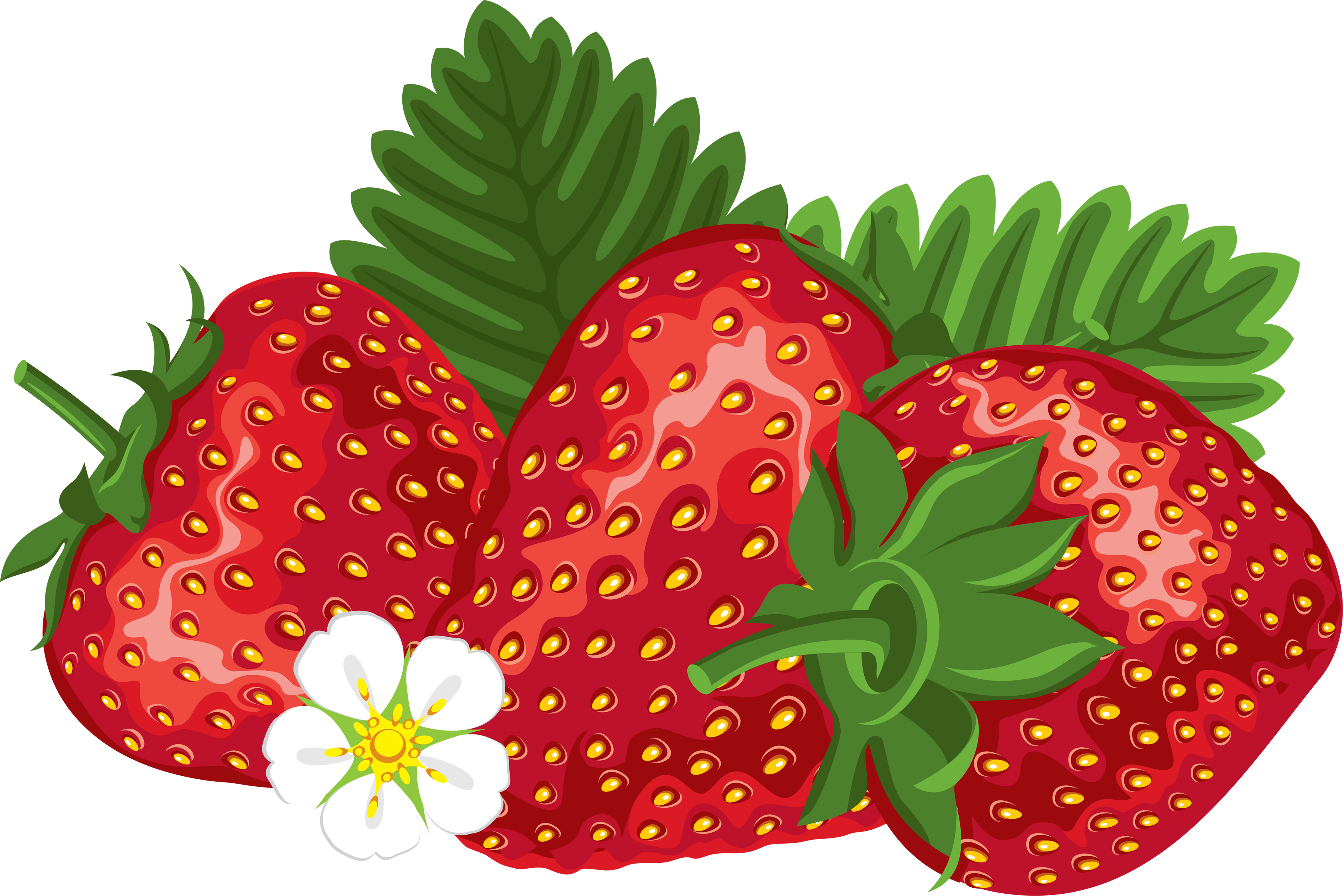 3439x2296 Strawberry Vector