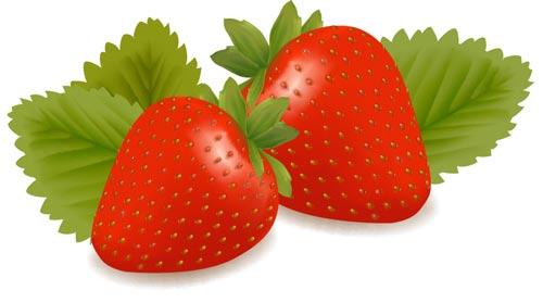 500x279 Fresh Fruits And Berries Vectors