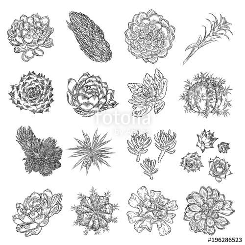 500x500 Set Of Tropical Plants, Hand Drawing, Cactus Flowers Guzmania