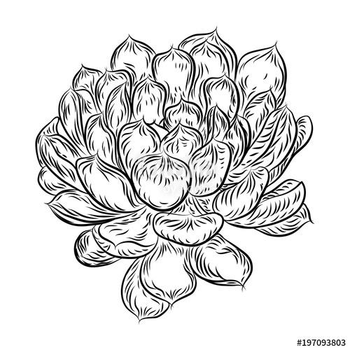 500x500 Tropical Plant, Hand Drawing, Cactus Flower Guzmania, Echeveria