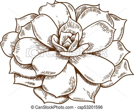 450x368 Vector Antique Engraving Illustration Of Succulent Isolated On