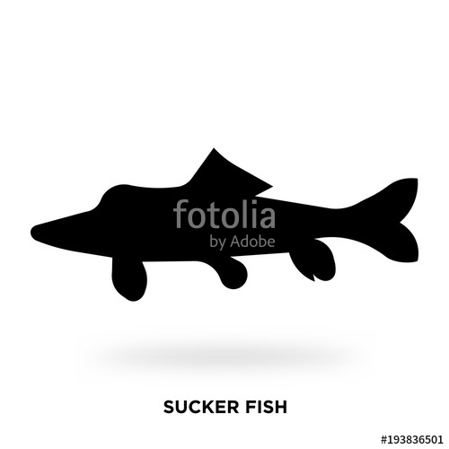 500x500 Sucker Fish Silhouette Stock Image And Royalty Free Vector Files