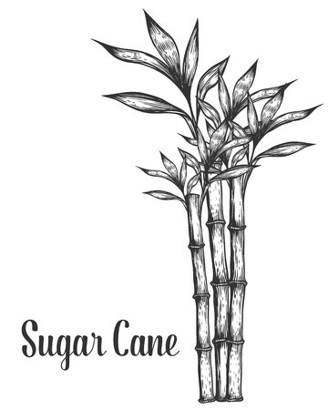 360x450 Ready Made Deisgns For Sugarcane