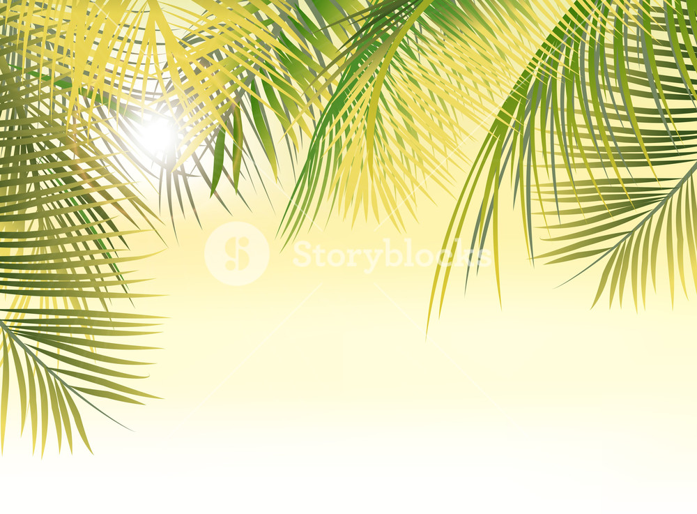 1000x737 Vector Summer Background With Palm Leaves Royalty Free Stock Image