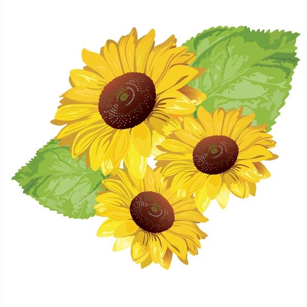 600x600 Sunflower Vector Free Vector In Encapsulated Postscript Eps ( .eps