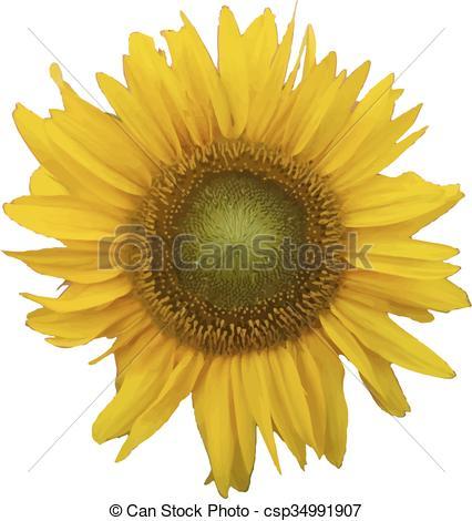 426x470 Sunflower. Vector Illustration.