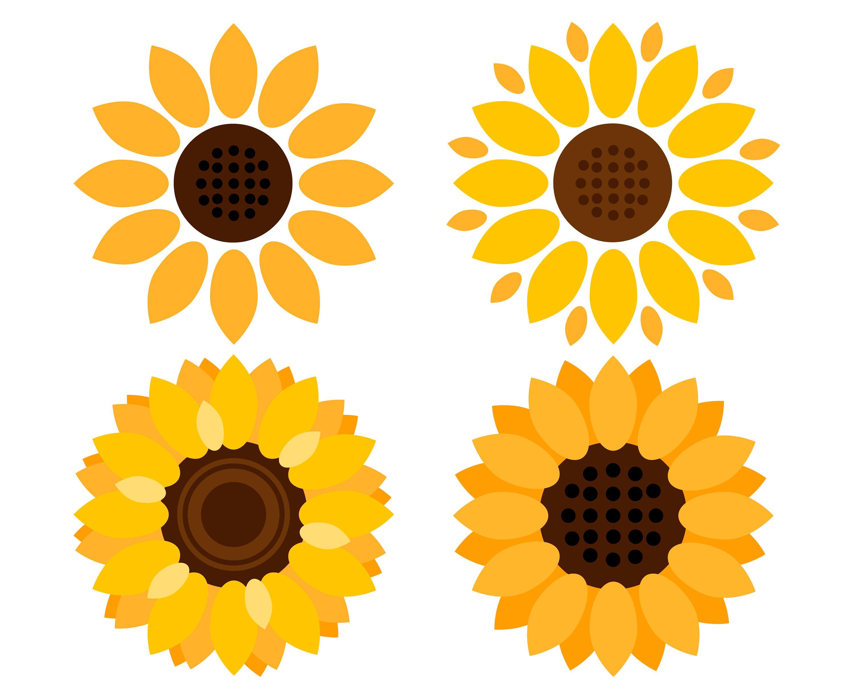3000x2455 Sunflowers Sunflower Etsy