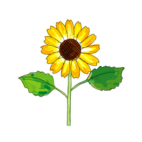 500x500 Vector Eps Material Free Download Sunflower