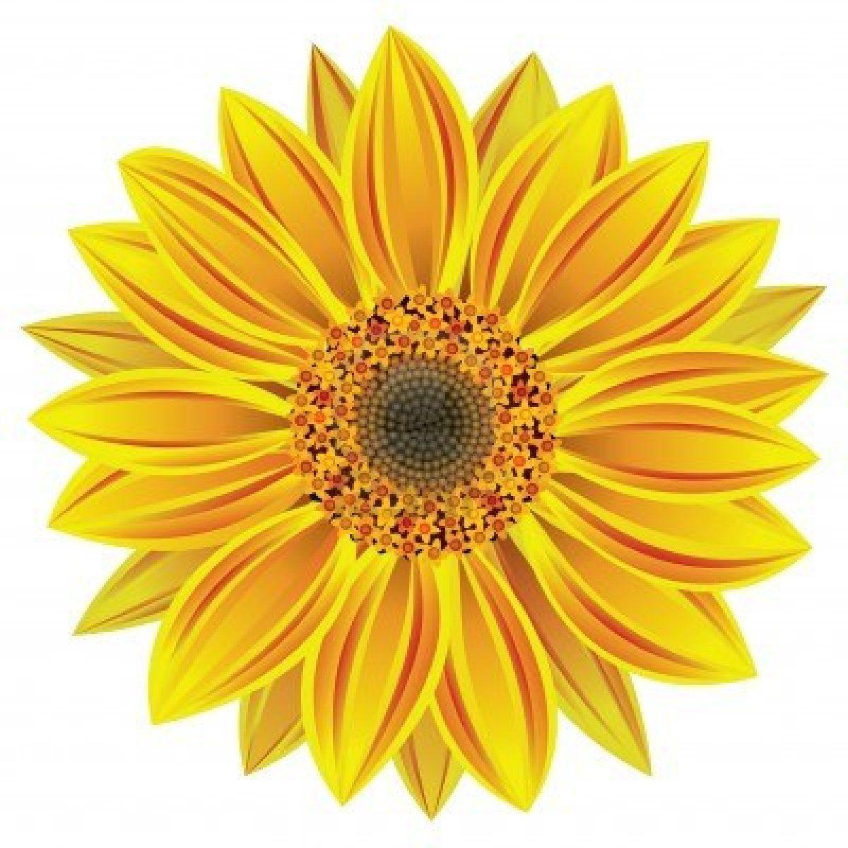 1200x1200 Vector Illustration Of Sunflower Ideas For Templatepattern