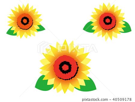 450x339 Vector, Vectors, Sunflower