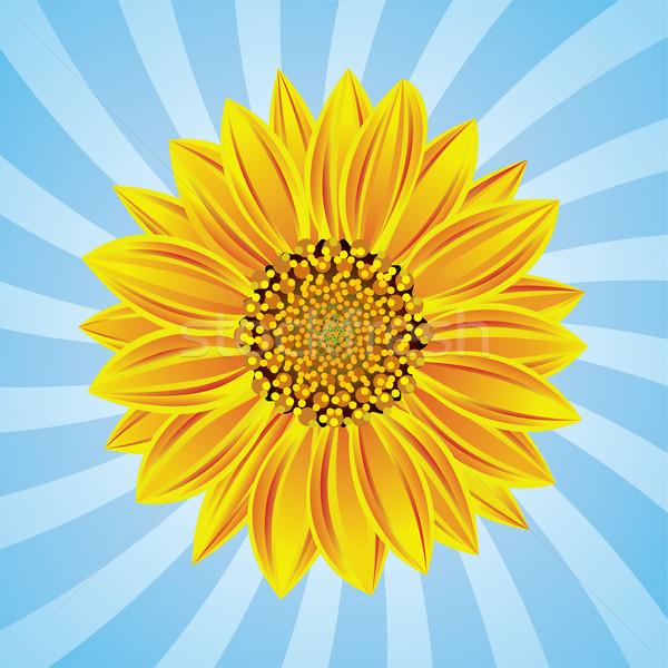 600x600 Vector Sunflower Vector Illustration Dmitry Merkushin