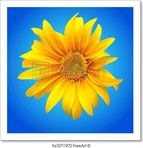 561x581 Free Art Print Of Sunflower Vector Illustration . Sunflower Vector