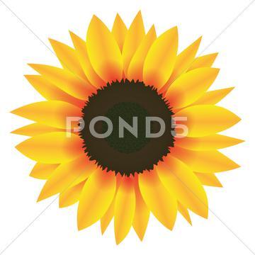 360x360 Illustration Vector Graphic Flower Sunflower Stock Images