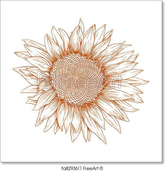 561x581 Free Art Print Of Vector Sunflower. Vector Sunflower In Vintage
