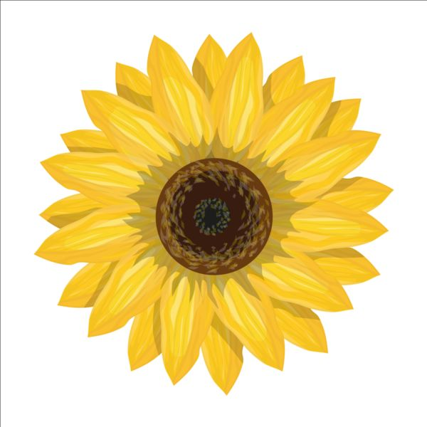 600x600 Simlpe Sunflower Vector Free Download