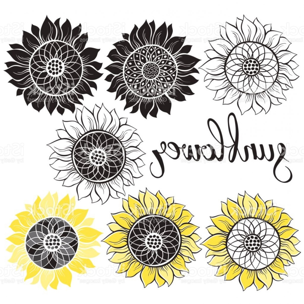 1228x1228 Sunflower Vector Illustration Of Seven Different Isolated Elements