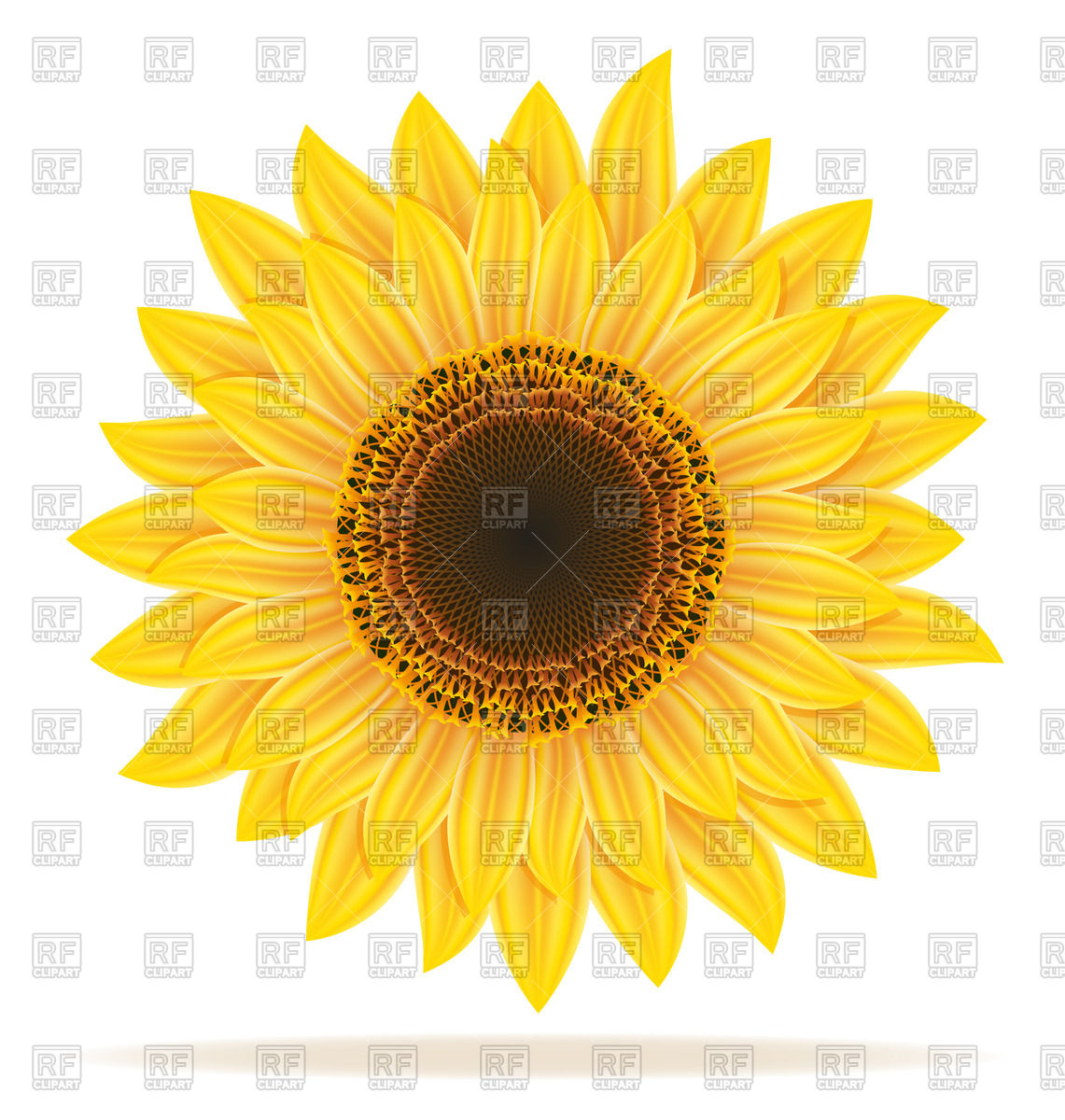 1141x1200 Sunflower Vector Image Vector Artwork Of Plants And Animals