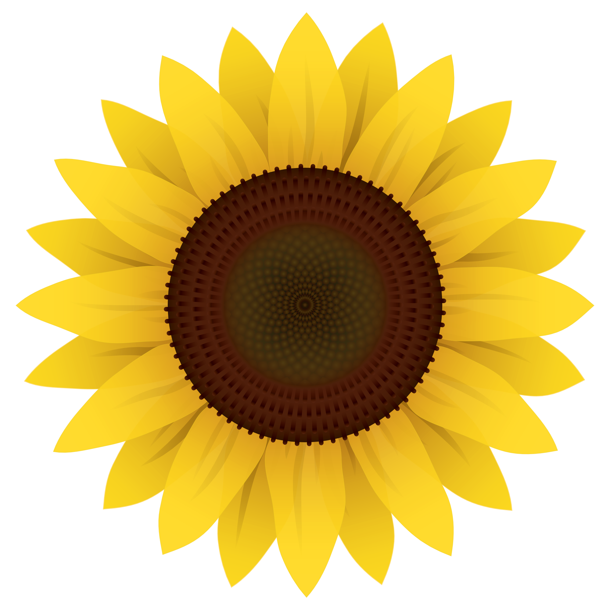 2000x2000 Sunflower Vector Png Image