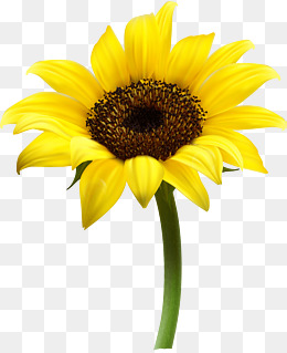 260x319 Sunflower Vector Png, Vectors, Psd, And Clipart For Free Download