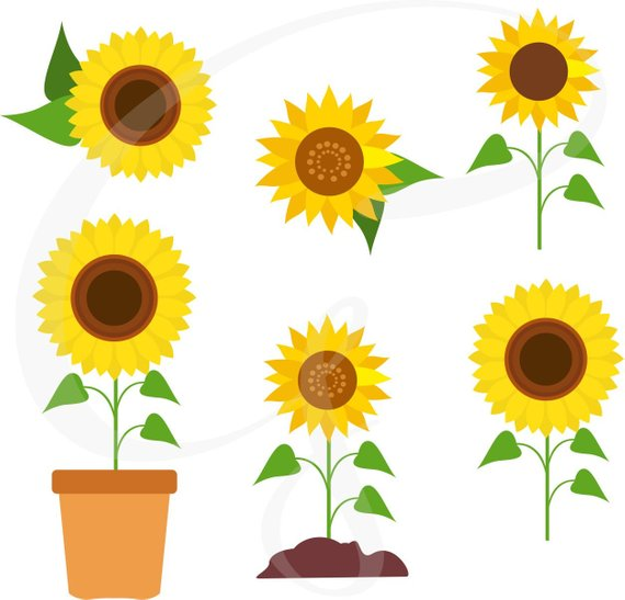 570x547 Sunflower Clipart Sunflower Vector Sunflowers Flower Etsy