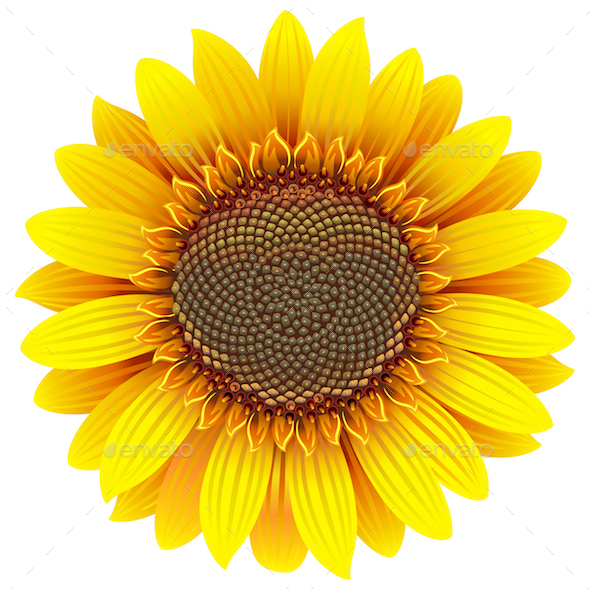 590x590 Vector Sunflower Icon By Dashadima Graphicriver