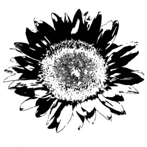 300x300 Sunflower
