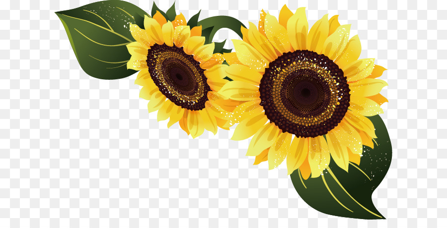 900x460 Common Sunflower Euclidean Vector