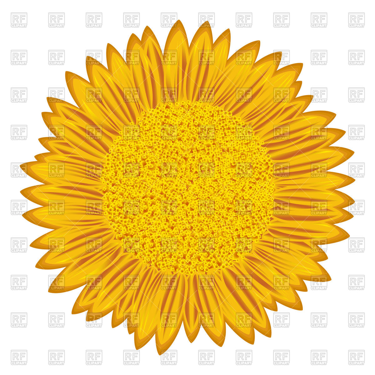 1200x1200 Detailed Flowering Sunflower Vector Image Vector Artwork Of