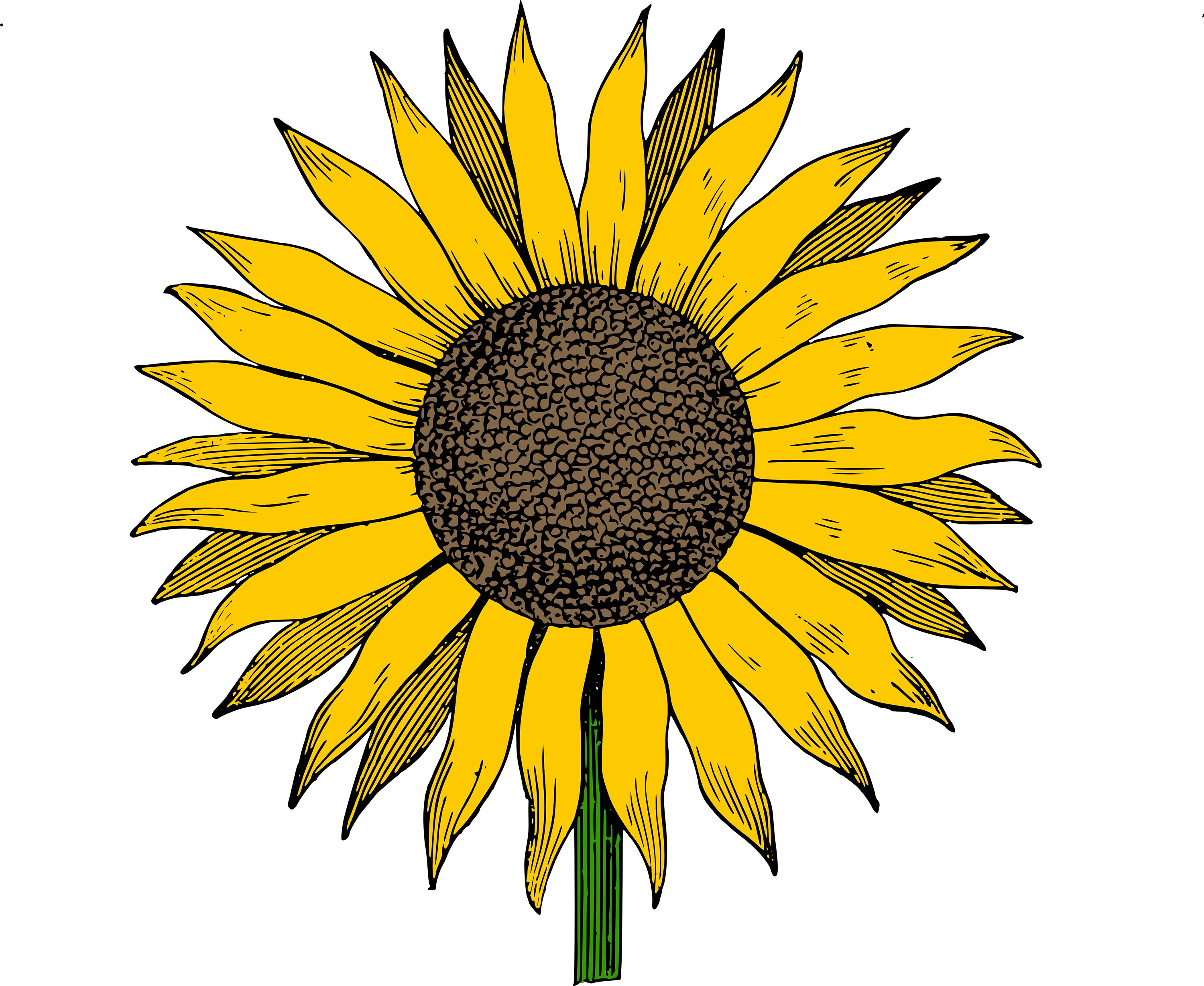 3000x2457 Free Clip Art Sunflower Vector Image Clip Art Department