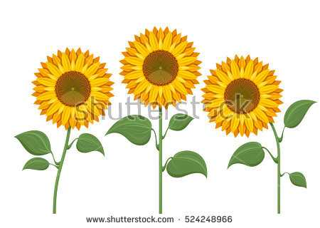 450x320 Sunflower Birthday Banner Lovely Sunflowers Vector Pattern