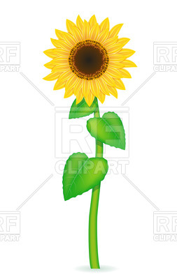 253x400 Sunflower With Green Leaves Vector Image Vector Artwork Of