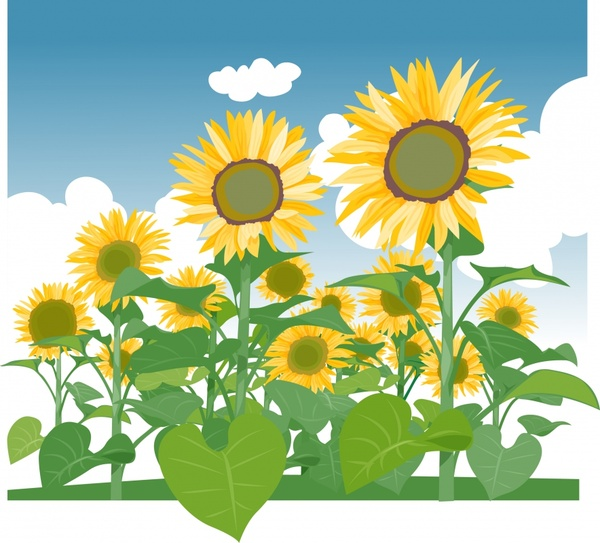 600x543 Beautiful Sunflower Vector Free Vector In Adobe Illustrator Ai