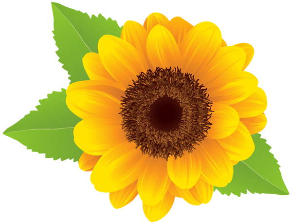 600x460 Collection Of Free Sunflower Vector Aesthetic. Download On Ubisafe